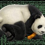 panda-personnage-tekken-3